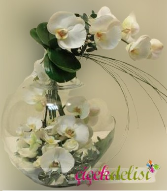 Elma Camda Orkideler