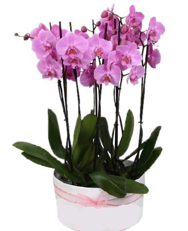 Seramik Ýçinde 6 dallý Renkli Orkide