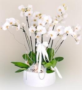Seramik Ýçinde 6 dallý Beyaz Orkide