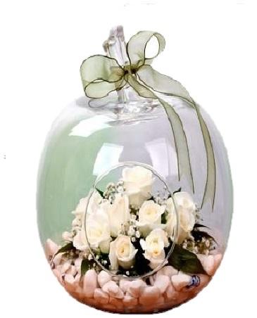Ortaboy Elma Camda Beyaz Güller