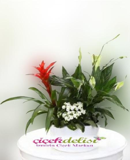 Özel  Çiçek Bahçesi