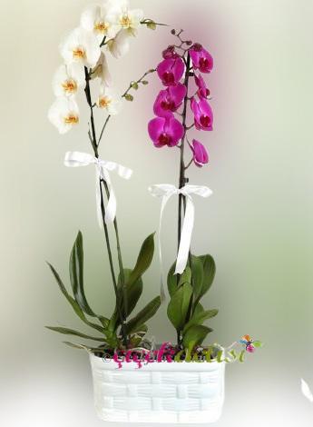Seramikte Pembe ve Beyaz Orkide