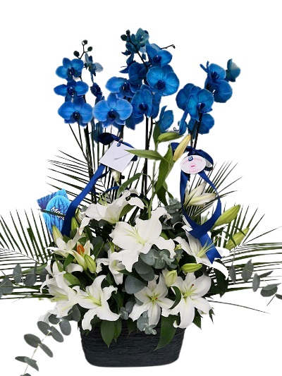 Mavi Orkide Aranjmaný
