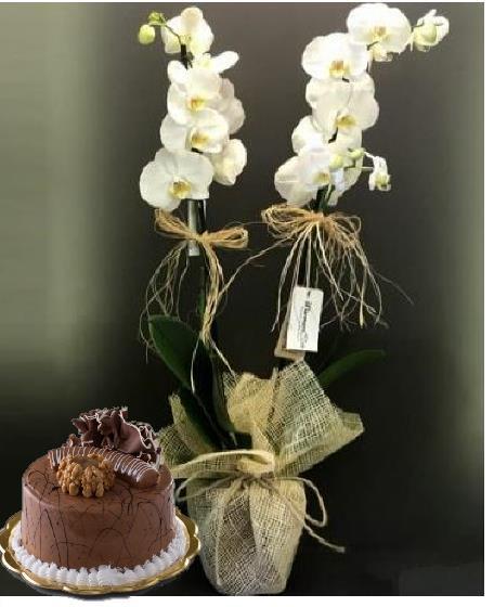 Çift dal orkide ve 4 kiþilik pasta